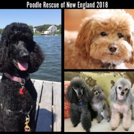 2018 PRNE Calendars are Available