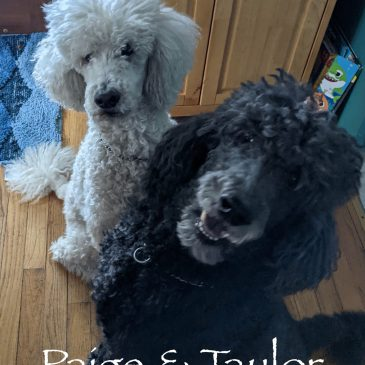 Paige and Taylor – Courtesy Post